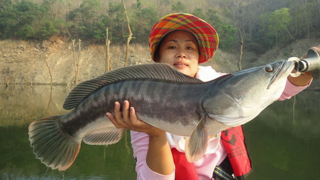 wild fishing chiang mai