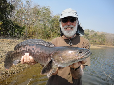 fishing chiangmai giant snakehead