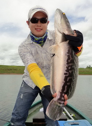 snakehead lure fishing Phayao
